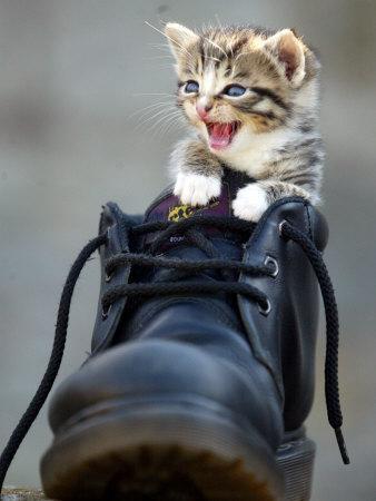A Kitten in a Boot