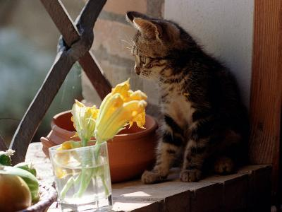 A Kitten Watching Through a Window, August 1997