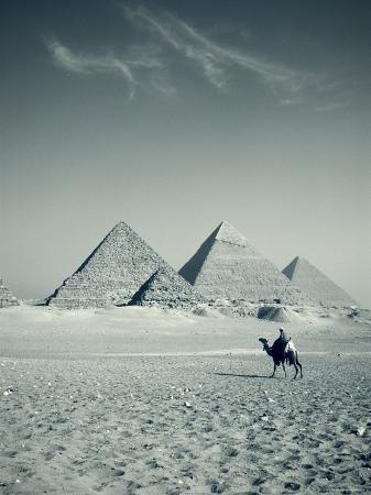 Camel and Giza Pyramids, Giza, Cairo, Egypt