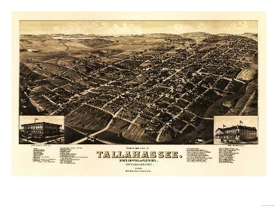 Tallahassee, Florida - Panoramic Map