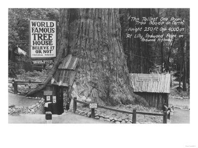 Lilly Redwood Park Tree House California Photograph - Redwoods, CA