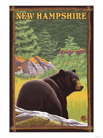 New Hampshire - Black Bear in Forest