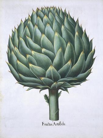 Artichoke from Hortus Eystettensis by Basil Besler