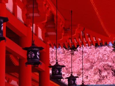 Heian Shrine in Spring, Shinto, Kyoto, Japan