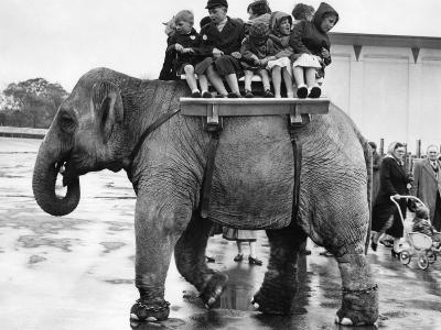 Children Ride on the Back of an Elephant at Belle Vue Manchester, May 1957