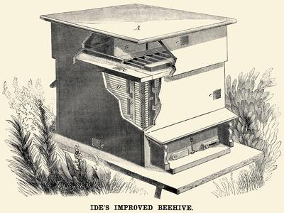 Ide's Improved Beehive