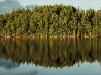 The Wooded Shoreline of Leech Lake Reflected on the Water's Surface