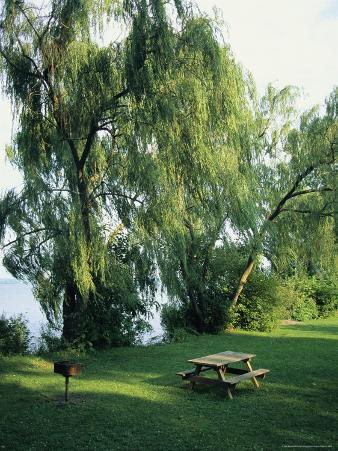 Willow-Lined Lakeside Picnic Area in Cayuga Lake State Park