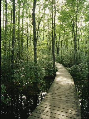 The Boardwalk Nature Trail in Great Swamp National Wildlife Refuge