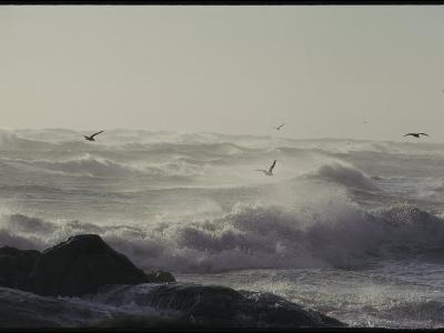 Sea Birds Fly Above Large Waves Crashing onto Maine's Rocky Coastline