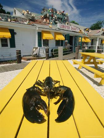 Huge Lobster is Slated For Dinner at One of Eastham's Restaurants
