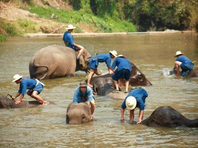 Mahouts Bathing Elephants, Thai Elephant Conservation Centre