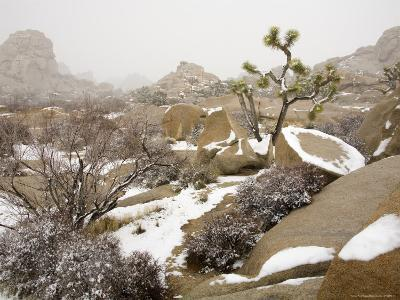 Rare Winter Snowfall in Lost Horse Valley