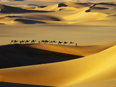 Tuareg Nomads with Camels in Sand Dunes of Sahara Desert, Arakou