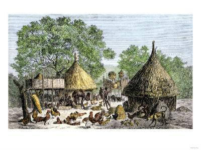 Daily Life in an African Village in the Congo Basin