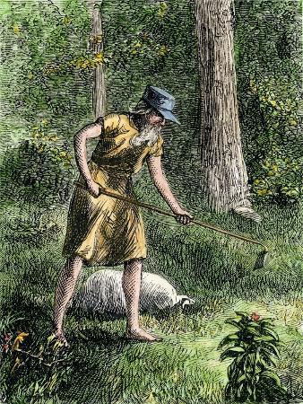 Johnny Appleseed Planting Apple Trees in the Ohio Wilderness