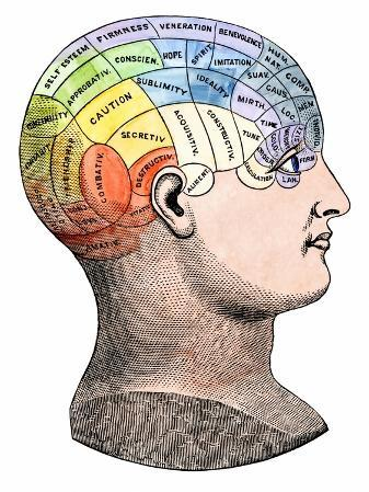 Phrenology Model of the Locations of the Various Organs of Mind in the Human Head