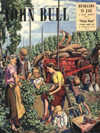 John Bull, Farming Hops Magazine, UK, 1948