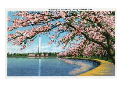 Washington DC, View of the Washington Monument with Blossoming Cherry Trees