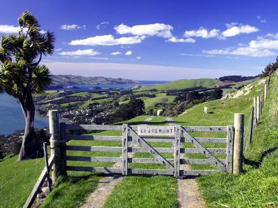 Gate and Cabbage Tree on Otago Peninsula, above MacAndrew Bay and Otago Harbor, New Zealand