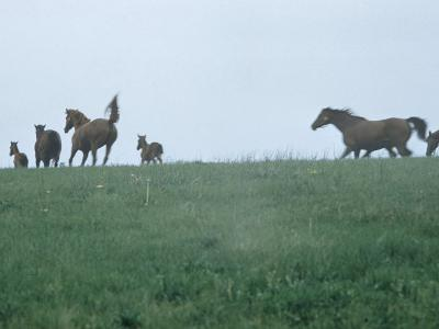 Calumet, Horse Farm