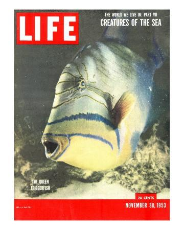 Queen Triggerfish, The World We Live In: Creatures of the Deep, November 30, 1953