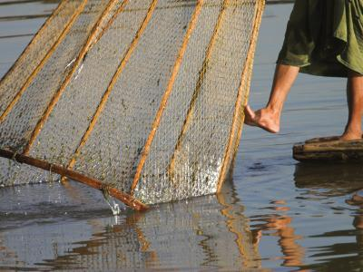 Intha Man Fishing with Cone Shaped Net, Inle Lake, Shan State, Myanmar