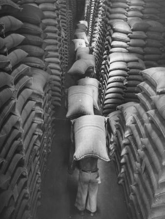 Brazilian Workers Carrying Large Sacks of Coffee Beans in Warehouse of Firm Lima, Noguera and Cia