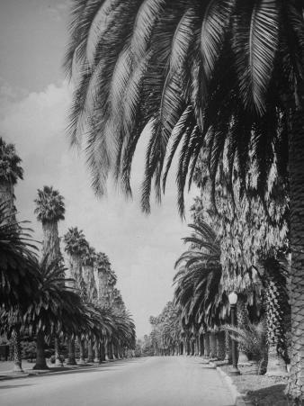 Palm Tree-Lined Street in Beverly Hills