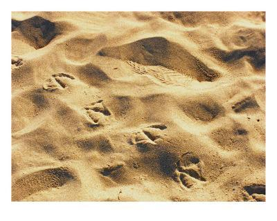 Seagull And Shoe Prints