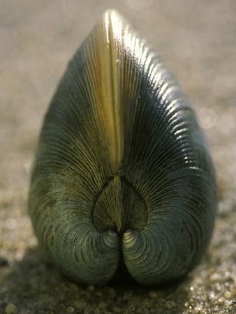 Clam Shell Standing on its Edge in Sand, Cape Cod, Massachusetts