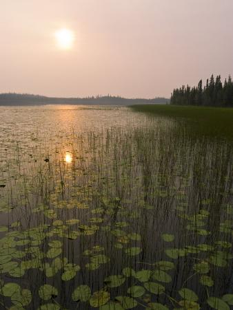 Sun and Reflection in a Lake with Grasses, Alaska