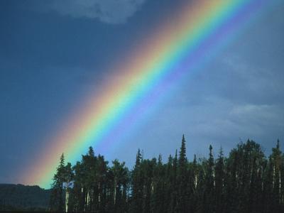 Rainbow over Forest, British Columbia, Canada
