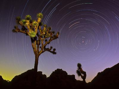 Joshua Trees and Star Trails in a Twilight Sky over California