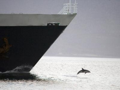 Dolphin Leaping from Water at the Bow of a Ship, Argentina