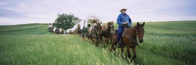 Historical Reenactment of Covered Wagons in a Field, North Dakota, USA