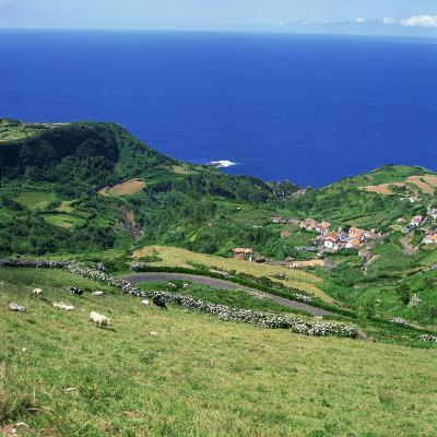 Cattle, Fields and Small Village on the Island of Flores in the Azores, Portugal, Atlantic, Europe