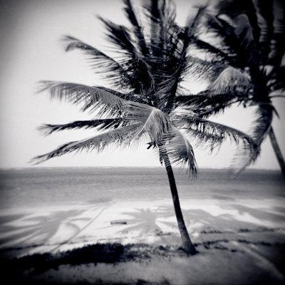 Palm Trees by the Beach at Bweju, Zanzibar, Tanzania, East Africa