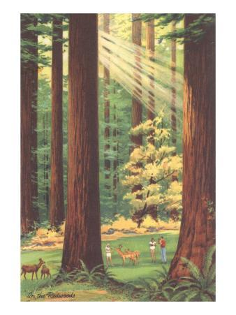 Redwoods Scene with People and Deer