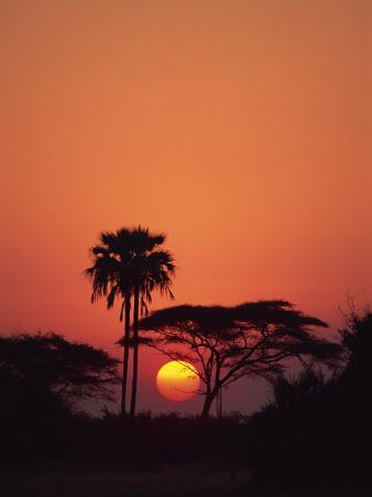 Tranquil Scene of Trees Silhouetted Against the Sun at Sunset, Okavango Delta, Botswana, Africa
