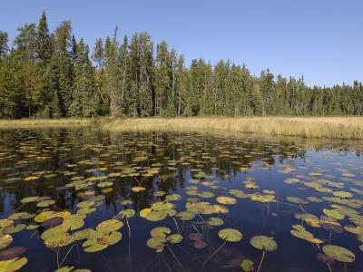 Frost River, Boundary Waters Canoe Area Wilderness, Superior National Forest, Minnesota, USA