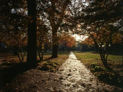New York City, Governor's Island, View of Nolan Park in Autumn; 1982