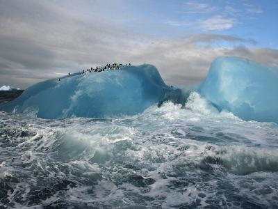 Chinstrap penguins rest atop a blue iceberg near Candlemas Island