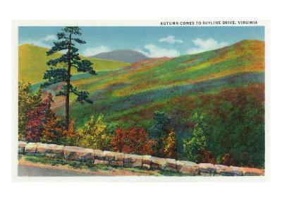 Shenandoah Nat'l Park, Virginia - Scenic Autumn View from Skyline Drive, c.1956