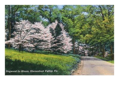 Shenandoah Valley, Virginia - View of Dogwood in Bloom, c.1956