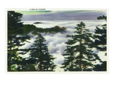 Great Smoky Mts. Nat'l Park, Tn - View of a Misty Clouds Amongst the Trees, c.1946