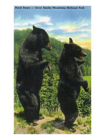 Great Smoky Mts. Nat'l Park, Tn - View of Two Black Bear Standing, c.1938