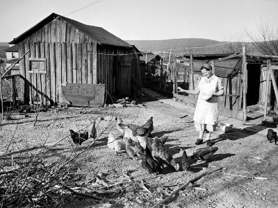 Farm Woman Feeding Her Chickens in a Small Coal Mining Town