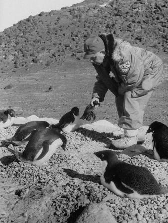 Rear Adm. George J. Dufek Playing with the Penguins