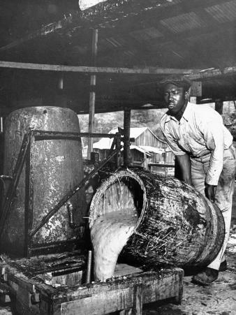 Worker Pouring Gum from Pine Trees into a Still During Turpentine Production